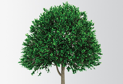 Illustration of large and green tree.