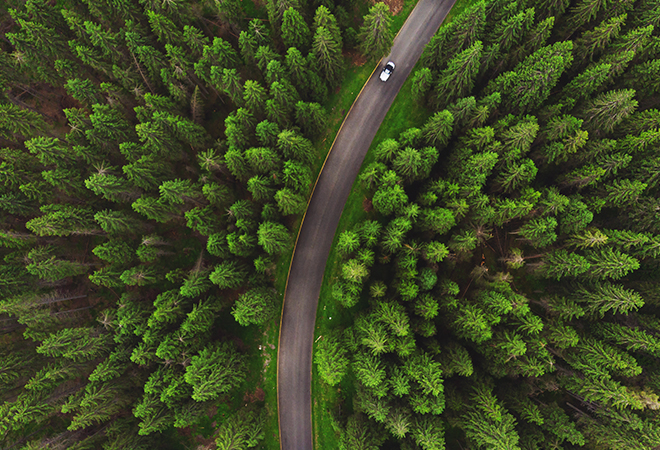 Car driving down winding road admist giant evergreen trees.