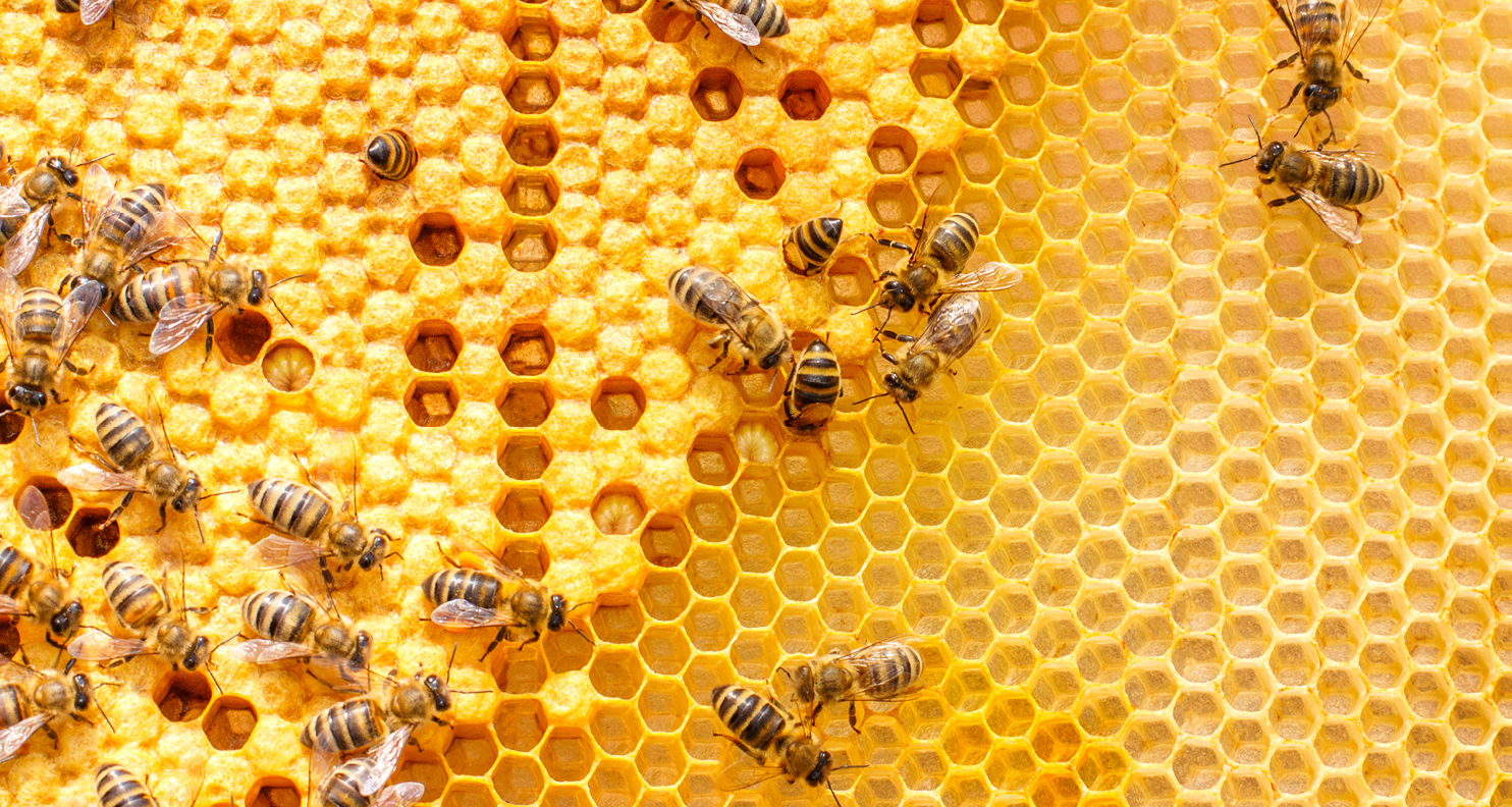 Bees in Honeycomb