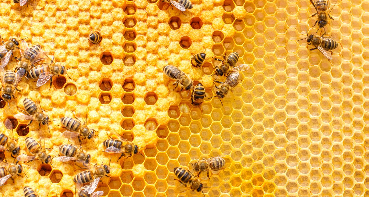 蜜蜂在蜂巢